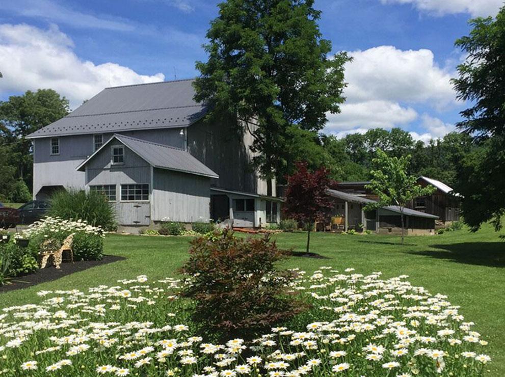 Daisy Flower | Filbert B&B, Danielsville, PA