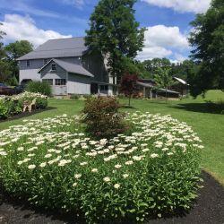 Outside House | Filbert B&B, Danielsville, PA