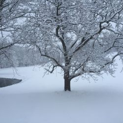 Snow Tree | Filbert B&B, Danielsville, PA