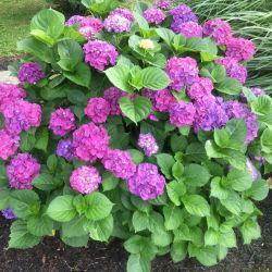 Flowers | Filbert B&B, Danielsville, PA